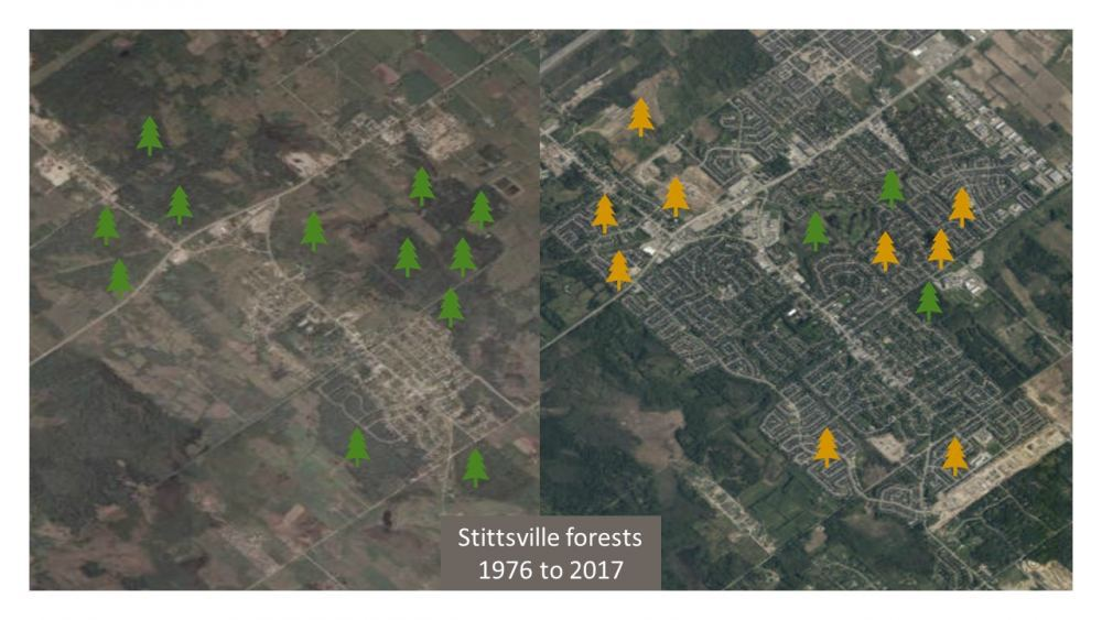 Stittsville forests - then and now