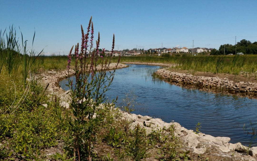 MVCA seeks volunteer campaign manager for Carp River Living Classroom