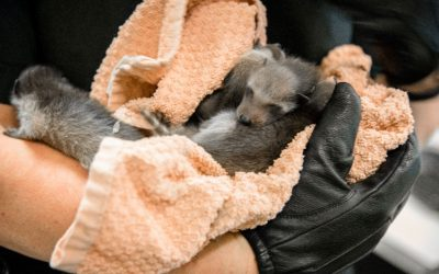 What to do if you find a baby wild animal without its parents