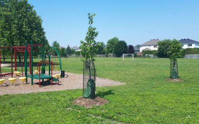 UPDATE: Spring tree planting program wraps up