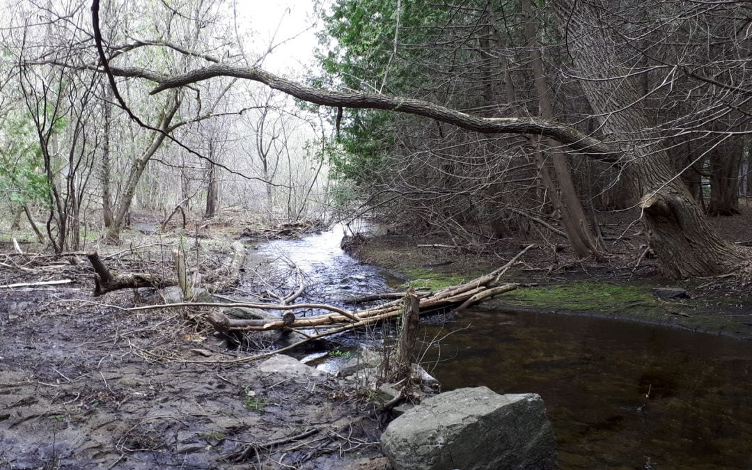 Volunteers needed to help with Poole Creek stewardship this summer