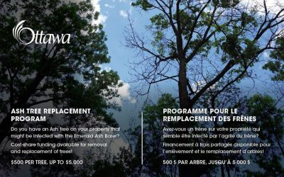 Grants available through the Ottawa Ash Tree replacement program