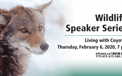 FEB 6: Wildlife speaker series – Living with Coyotes