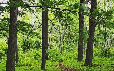 Spring 2021 tree planting update
