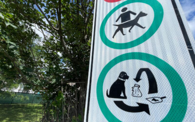 Know the rules for dogs in parks
