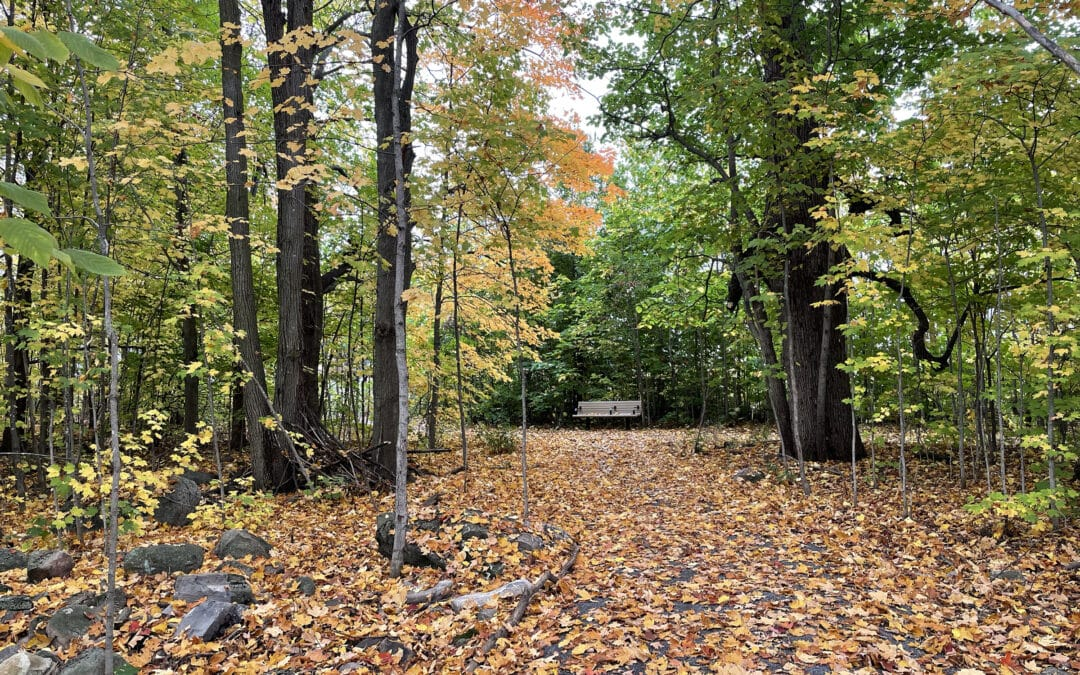 Fall 2021 tree planting update
